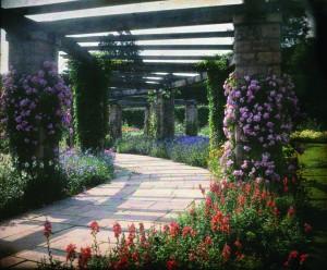 Gardens for the Duchess 2