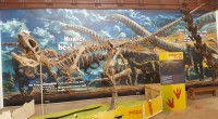 The Dinosaurs of China exhibition has now officially opened at Wollaton Hall (and Lakeside Arts) with over 7,000 people said to have visited over the opening weekend alone. This exciting […]