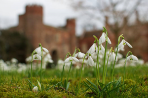 Snowdrops Hodsock Priory - Credit Iain K.L. McGregor