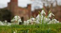 The snowdops at Hodsock Priory in Nottinghamshire offer a magical spectacle for all those visiting, and now those travelling to the historic venue can combine this […]