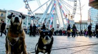There is nothing better than exploring a new city, and across Europe, pet lovers are increasingly seeking out cities where four-legged friends are also welcome. Whether you fancy sunbathing in […]