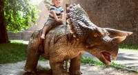 A rare chance to walk among the dinosaurs on a Jurassic journey of discovery in a brand new immersive outdoor experience is coming to Nottinghamshire.   Dino Kingdom […]